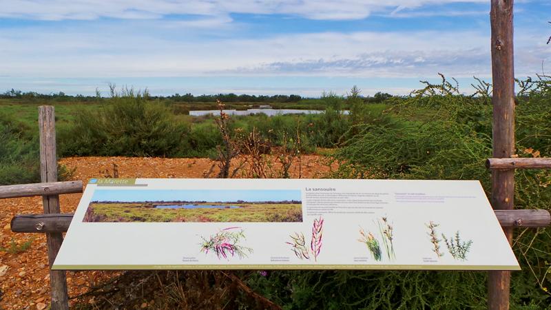 Le sentier découverte de la Marette offre des informations très riches sur la faune et la flore.