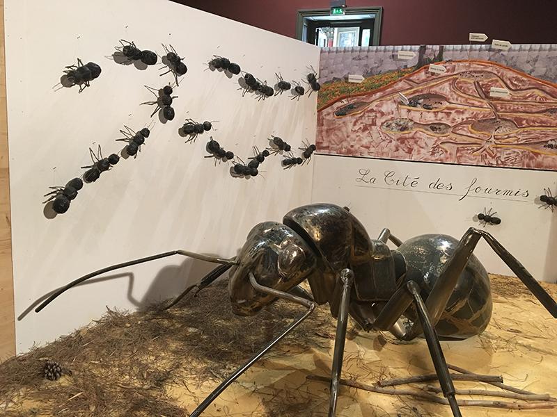 Cité des fourmis Insectorama © OTNîmes