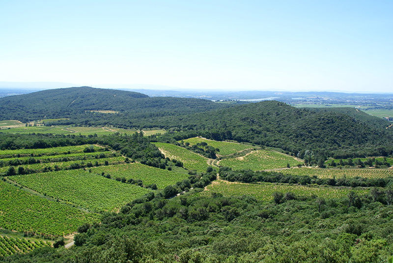 Vignoble de Chusclan