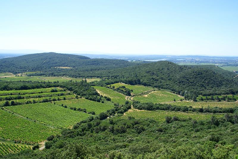 Vignoble de Chusclan