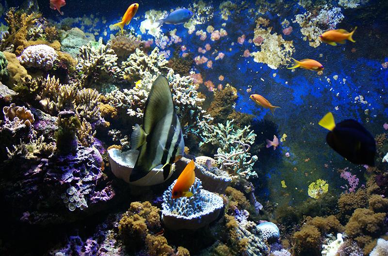 Les poissons tropicaux...