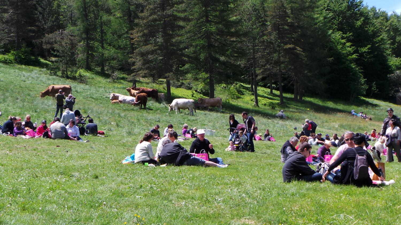 Les familles pique-niquent près des vaches sous le soleil des Cévennes.