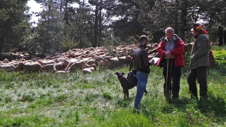 Les bergers après la descente des troupeaux dans le village.