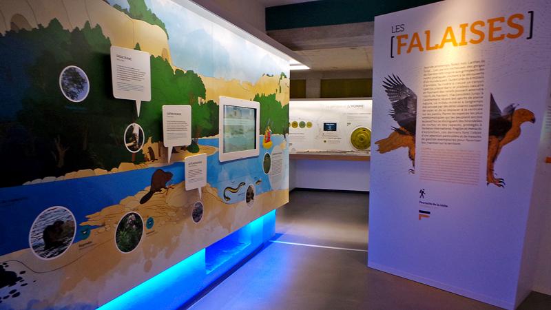 L'espace muséographique de la Maison du Grand Site permet de découvrir la faune et la flore du Gardon.
