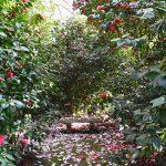 Parc floral des Camellias de la Prairie