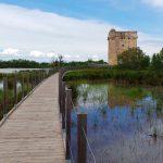 Depuis la Maison du Grand Site de la Camargue Gardoise découvrez les paysages, la faune et la flore.