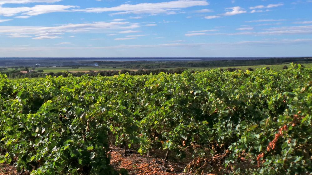 Saint Gilles est bordé par les Costières de Nîmes et ses délicieux vins méditerranéens.