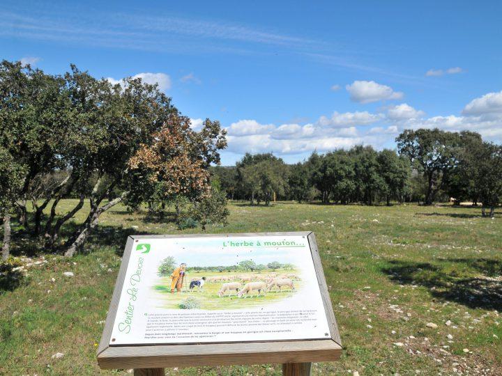 Nîmes côté nature